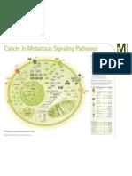 Cancer & Metastasis Signaling Pathways