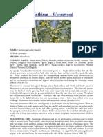 Artemisia absinthium – Wormwood