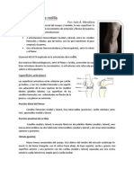 Articulacion de La Rodilla2