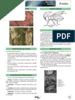 Zoologia FILO ARTROPODA Conceitos Basicos BOM