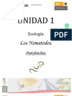 Zoología_PratylenchusLISTO