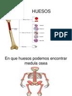 Anatomia de Huesos Con Medula