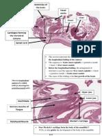 Oral Histo Midterm Review.pdf