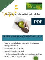 Energia Celular
