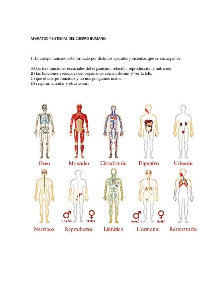 Aparatos y Sistemas Del Cuerpo Humano | Sangre | Sistema respiratorio