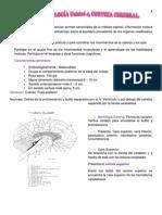Resumen de Neurofisiologia, Unidad 4