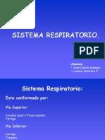 Anatomia Del Sistema Respiratorio