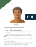 Anatomi Sinus Maxillaris
