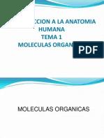 1 MOLECULAS ORGANICAS.ppt