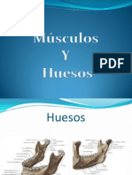 msculosyhuesos-100202193219-phpapp02