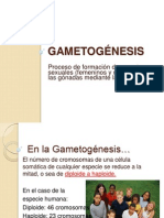 2-Gametogenesis.ppt