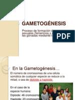 2-Gametogenesis.ppt