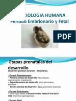 5-PERIODO EMBRIONARIO Y FETAL.ppt