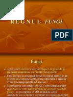3 Fungi Ferigi