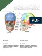 Material de Estudo Anatomia