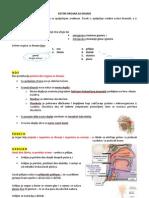 Sistem Organa Za Disanje