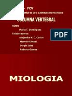 Columna Vertebral 3
