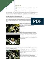 E-Arquivos CFR2º ANO DE FORMAÇÃO2º ANO DE FORMAÇÃO-2012CICLOVIAlt. 20 - Cultivo do MaracujáPOLINIZAÇÃO DO MARACUJÁ