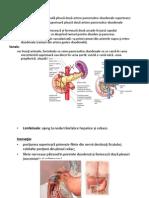 Aparat Digestiv III