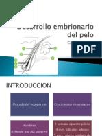 Desarrollo Embrionario Del Pelo