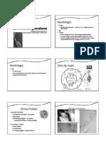 P11 Echinococcus