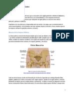 Anatomia Basic a Cad Era