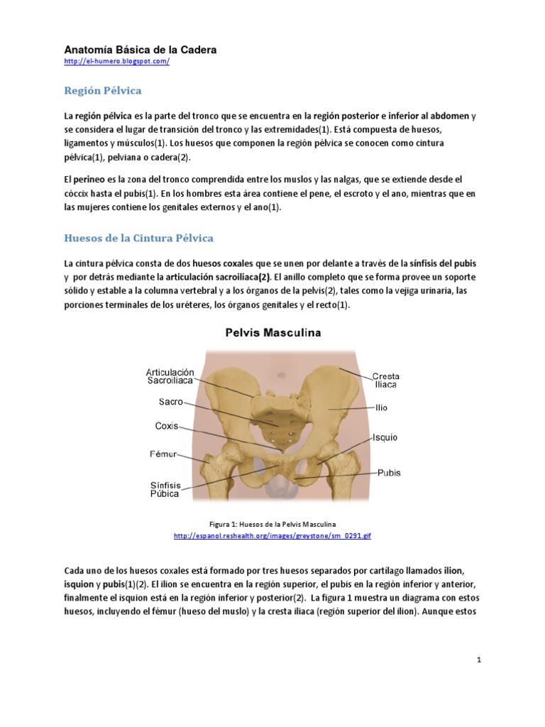 Hermosa Diagrama De Hueso Pélvico Embellecimiento - Anatomía de Las ...