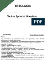 2º_aula_teórica_Epitelial_Glandular_e_Conjuntivo_I (3)