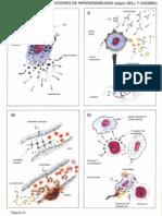 atlas imunologie