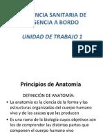 UT1.1 Principios de Anatomia