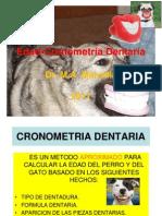 Cronometría Dentaria 2013
