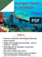 ihashimi Penyu Haiwan Marin Terancam-Penghayatan Taman Laut