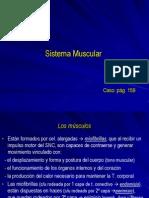 V Sistema Muscular