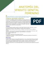 Genital Femenino2