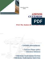 03 Aula Anexos Cutaneos