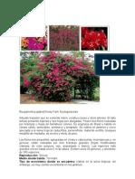 Plantas Tropicales Perennnes