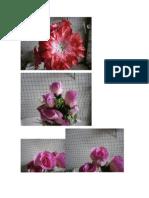 Flores[2]
