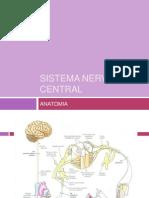 Sistema Nervoso Central Anatomia