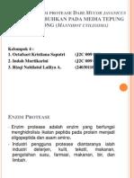 Aktivitas Enzim Protease Dari Mucor Javanicus YANG DITUMBUHKAN