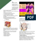 9 Pag Nursing in Dermatologie