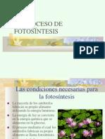 fotosintesis-1206211953531143-5