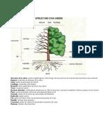 Structura Unui Arbore