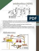 Regulacion Hormonal Del Volumen de Orina