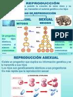 anexo1-8ºREPRODUCCIÓN