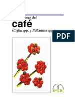 Descriptor de cafe.pdf