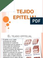 tejidoepitelial-120528175528-phpapp02