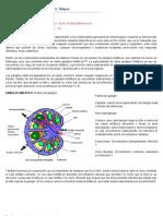 Histología del Sistema Inmune, Clase Tutor, Javier Rosas Bahamonde