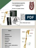 Anatomia de Los Huesos Del Miembro Superior