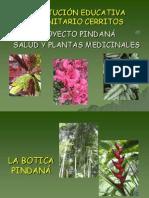 plantas-medicinales-usos3