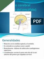 Anatomia Tronco Cerebral